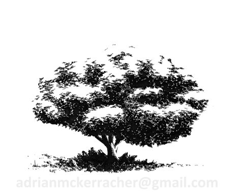 Tree (Private Collection)